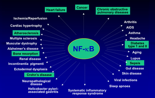 FN-kB and its link to most diseases
