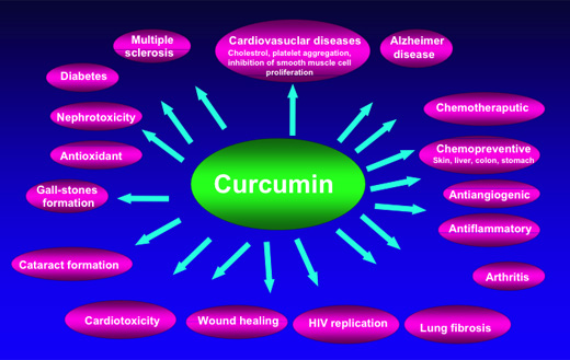 THERAPEUTIC POTENTIAL OF CURCUMIN
